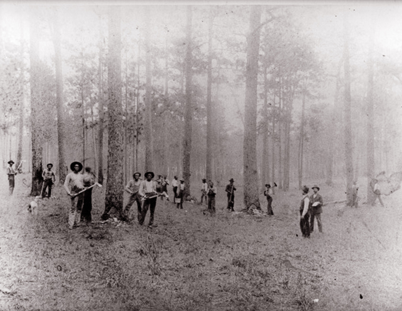 Turpentine Workers in the Round Timber Tract